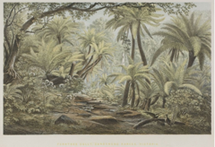Ferntree Gully, Dandeong Rangers (Victoria) image