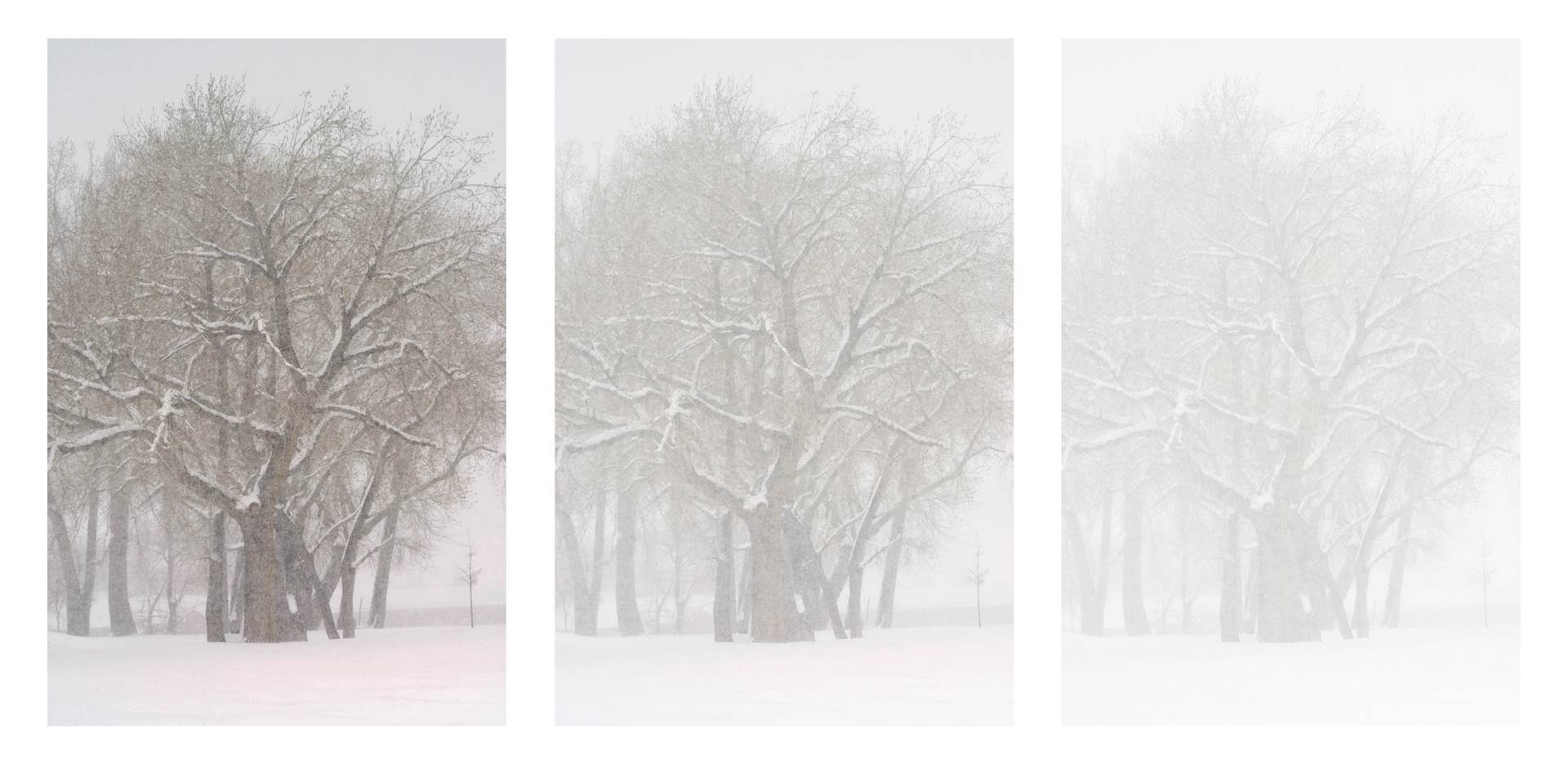 Bo Cheatham. North Shore Flurry . Triptych. Color Digital Photography. 16.5