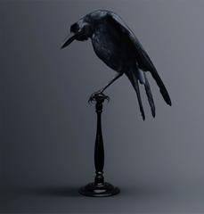 Vincent Fournier, Carrion Crow, Bird of Memories image