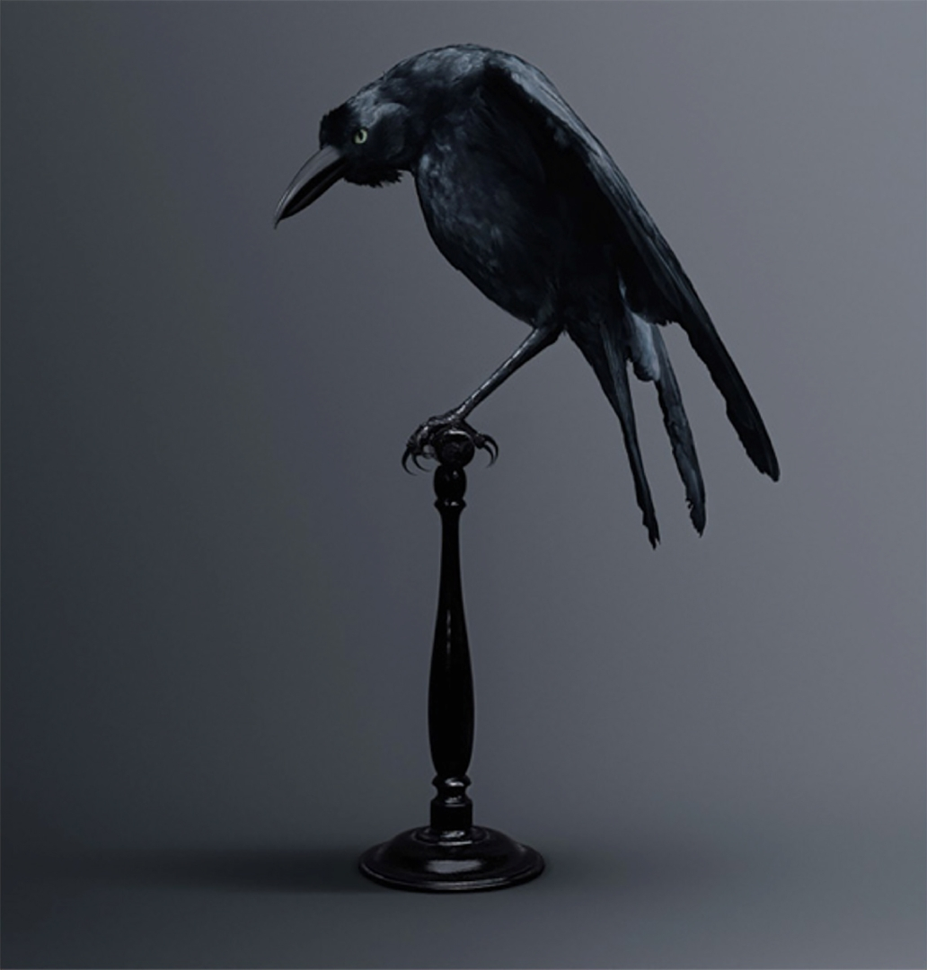 Vincent Fournier, Carrion Crow, Bird of Memories image