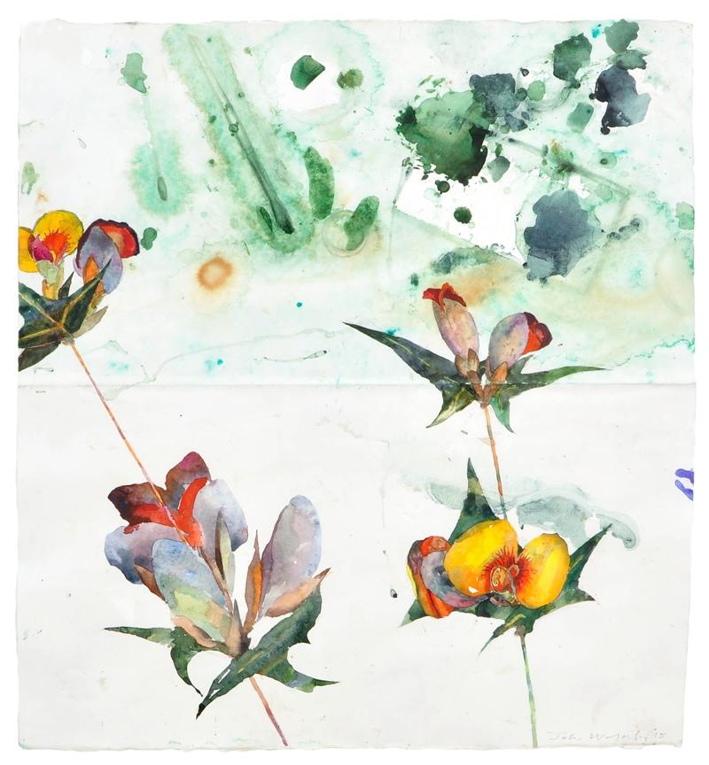 Papilionaceae species with paint brush Grampians Ranges image