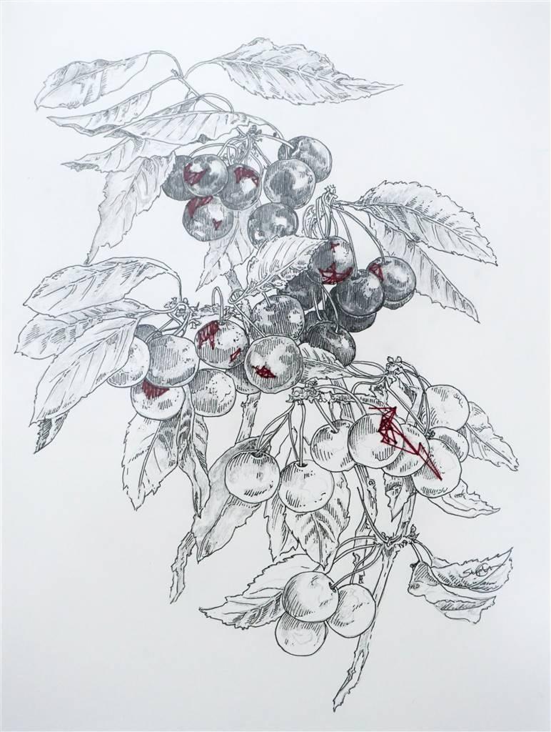 Stephanie E. Graham,Threaded Cherries,Pen on Paper,17''x15'' image