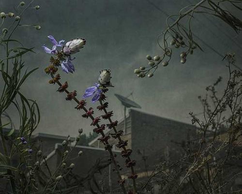 Daniel Shipp - 'Botanical Inquiry' image
