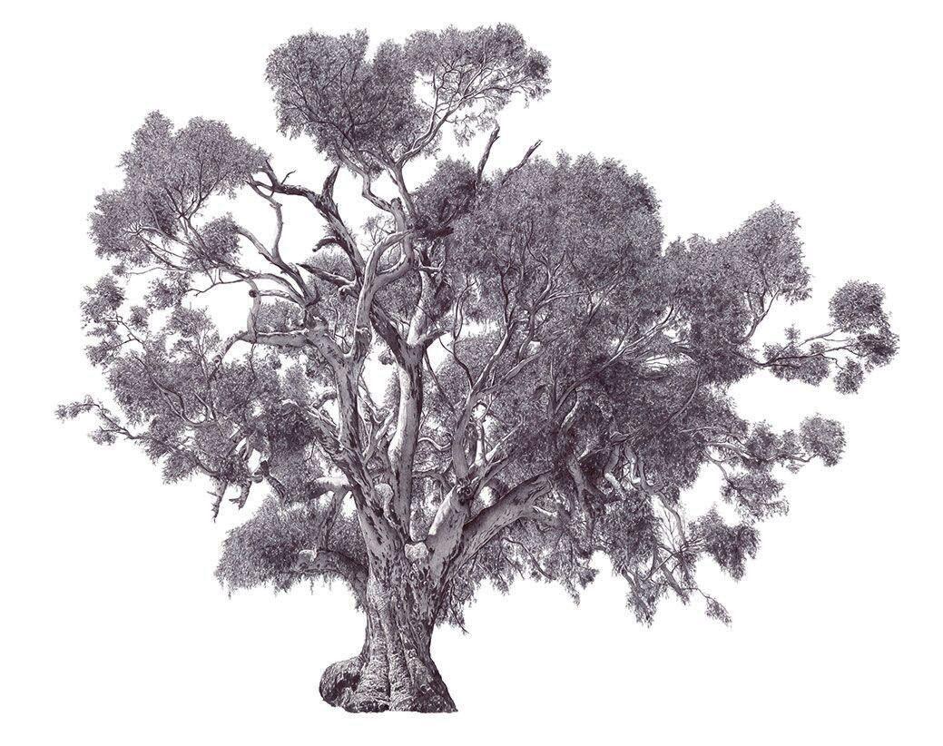 The Big Tree image
