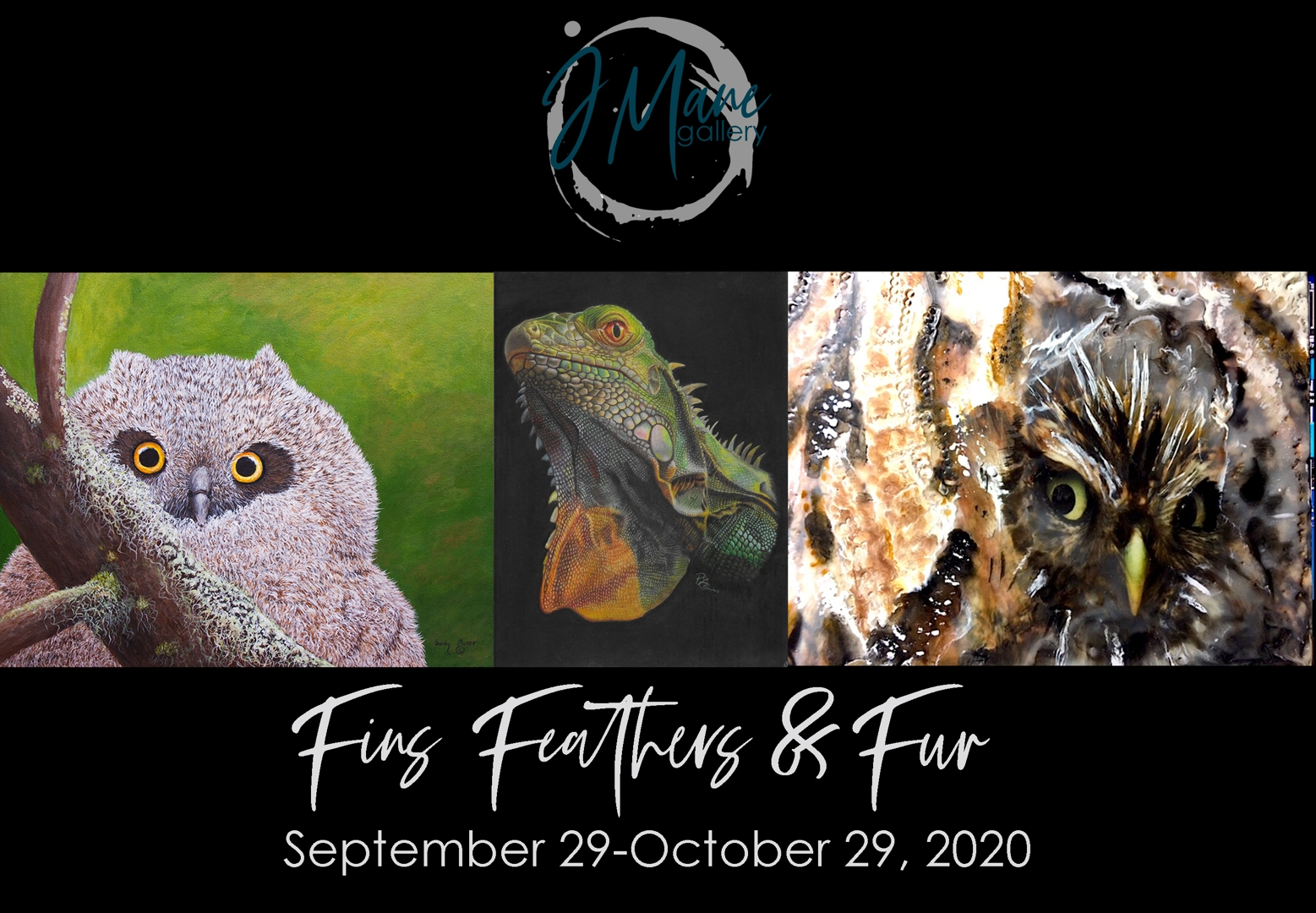 Fins, Feathers & Fur image