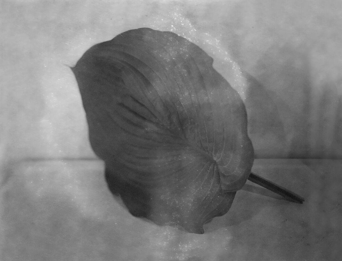 Big Leaf on Table image