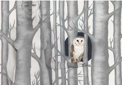 Owl in Woods II image