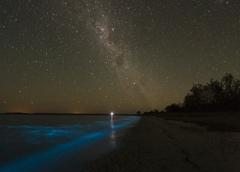 Bioluminescent Algae, photo by Phil Hart image
