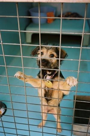Penny Koukoulas: Lost Dogs image