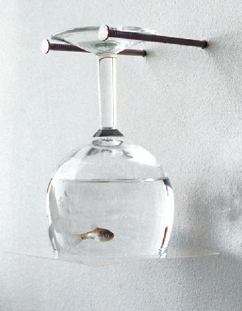 In Vitro. 1996. image