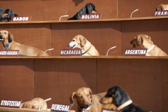 Sausage Dogs save the world... Dachshund U.N. image