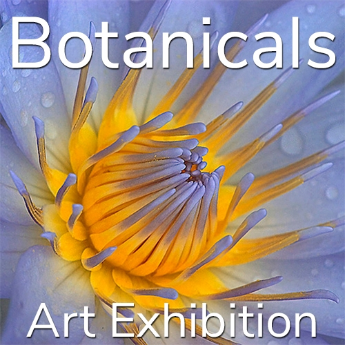 """Botanicals"" 2020 Art Exhibition Winning Artists Announced image"
