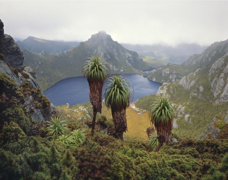 Australian exotica   image