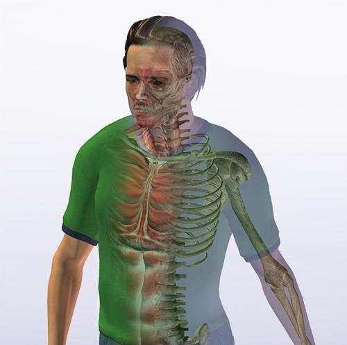 Max500_anatomy2