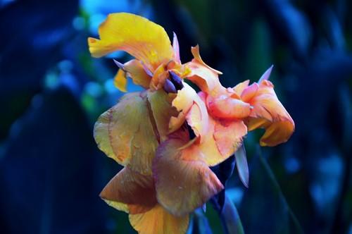 Max500_orange_flower_1