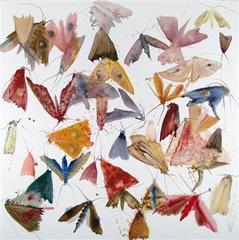 Max240_ar_moths28web