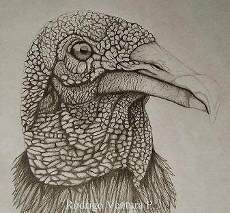 Max500_coxcacuauhtl_zopilote_vulture_-_copia