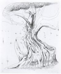 Morton Bay Fig image