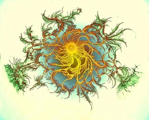 Bacterial Art: Petri Dish Artworks by Eshel Ben-Jacob image