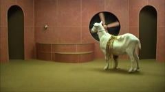 Hayden Fowler: Goat Odyssey image