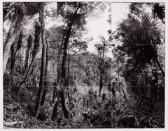 David Stephenson: Self Portrait Looking Down A Survey Cut, Proposed Site Of Gordon Below Franklin Dam, Tasmania image