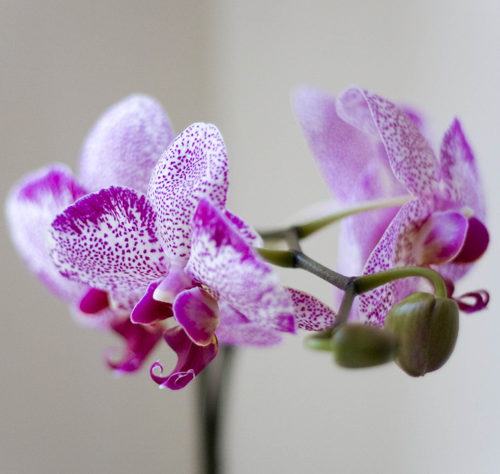 The Orchid Project image