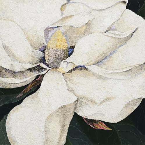 Magnolia georgiana 2014 after George Dionysius Ehret 1743   image