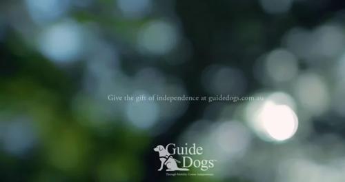 Guide Dogs Bush image