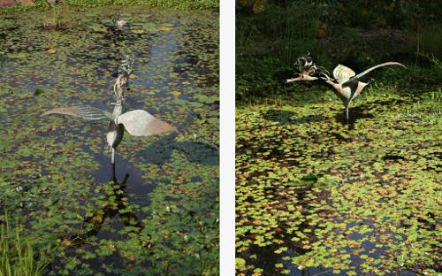 The Water Bird image