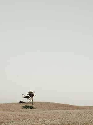 Island Dreaming: King Island image
