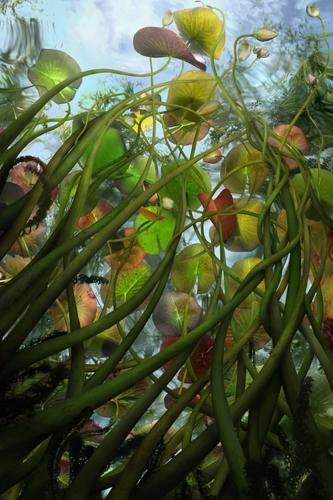 Submerged No.2 image