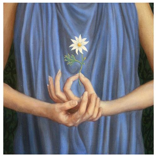 Flannel Flower image