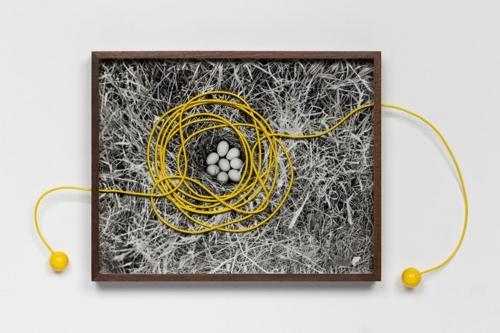 Untitled (Eggs) image