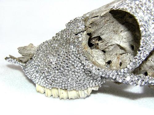 Semi-Precious (d.h animal skull) image