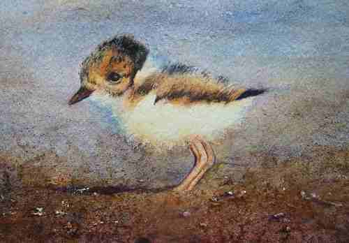 Life Really is a Beach to a Hooded Plover image