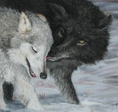 Wolf pair image