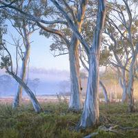 Navarre Trees, Rob Blakers image