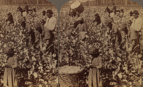 Capitalism: Slavery  image
