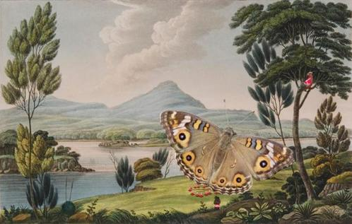 Once upon a time in Great Parrotland (butterfly)  2010 image