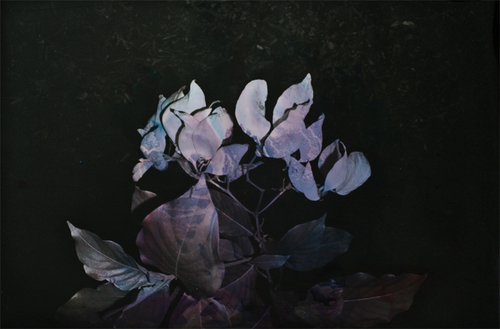 Black Varieties #5 Aruna  image