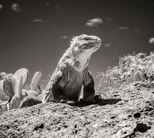 Galapagos Surreal image