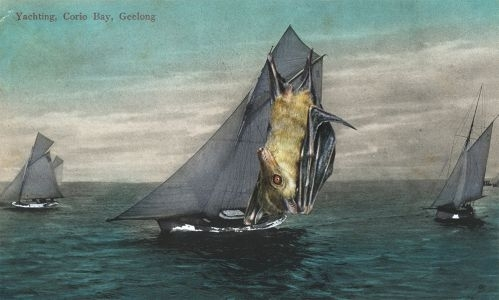It had to be said, when it came to yachting, the Dog bat provided sails like no other (detail) image