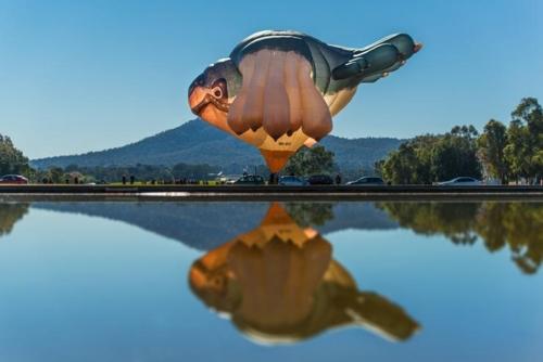 Patricia Piccinini's Skywhale image