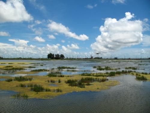 2015 Call for Proposals, Cheng Long Wetlands International Environmental Art Project  image
