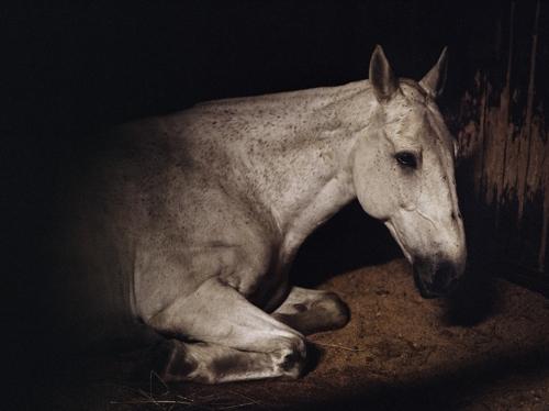 Charlotte Dumas: Anima and the Widest Prairies  image