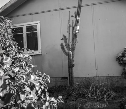 Lisa Garland, Cactus, 2010 image