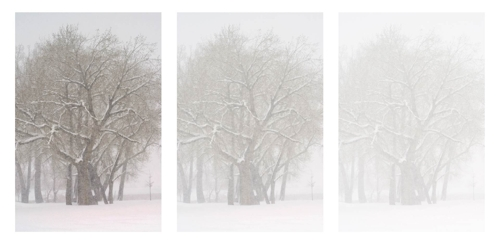 "Bo Cheatham. North Shore Flurry . Triptych. Color Digital Photography. 16.5""x33"" image"
