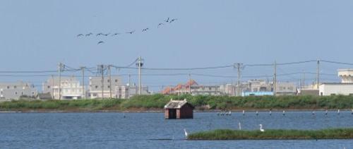 2016 Call for Proposals, Cheng Long Wetlands International Environmental Art Project image
