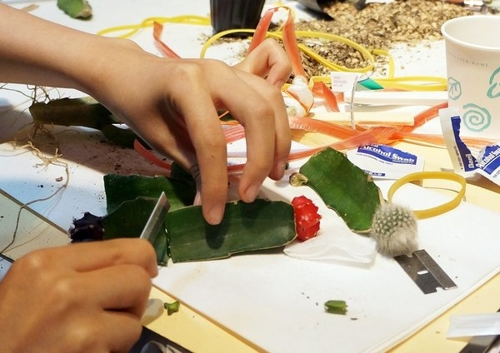 Soyo Lee's Cactus Grafting Workshop image