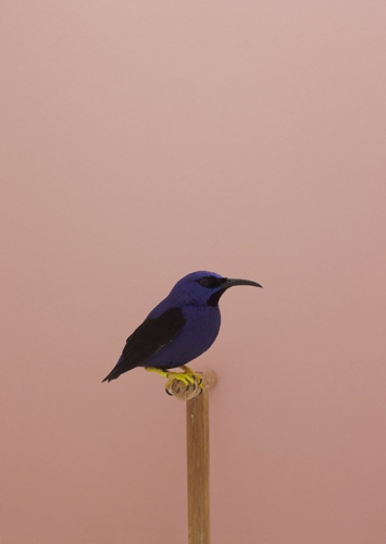 Luke Stephenson An Incomplete Dictionary of Show Birds image